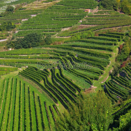 wachau weinberg wachau vineyard 10