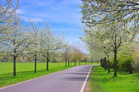 kirschbluetenallee cherry blossom avenue 01
