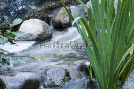 waterflow with plant