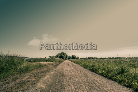 nature path with fields and trees