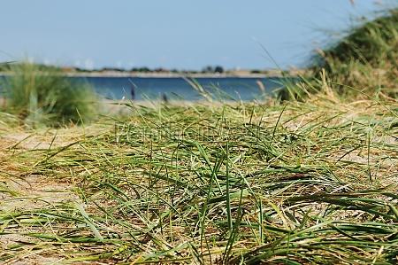dunes beach sea fehmarn