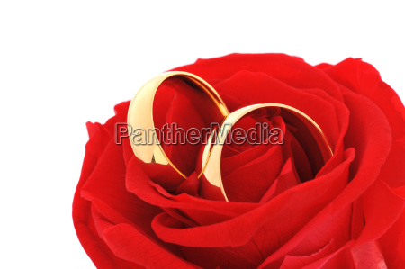 two rings with rose