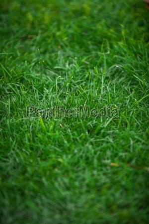 shot of uncut fresh green grass