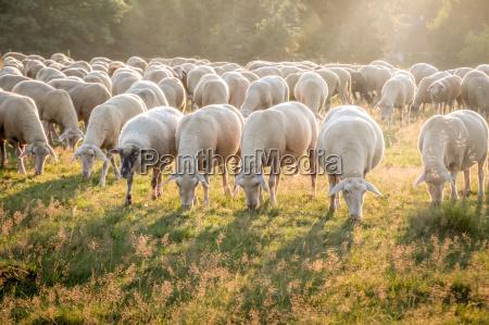 flock im taunus