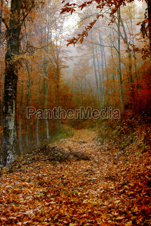 leaves covered path in the forest
