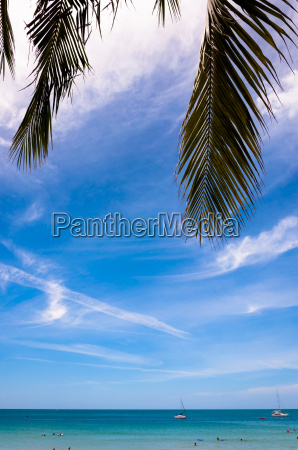tropical sea with palm leaves and