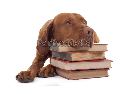 dog with a stack of books
