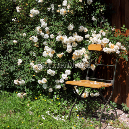 garden chair with roses and watering