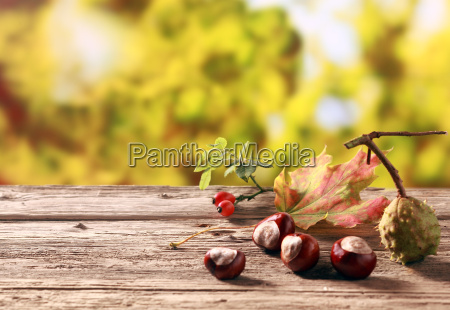 chestnuts and rose hips in an