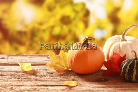 fresh pumpkin and squash in an