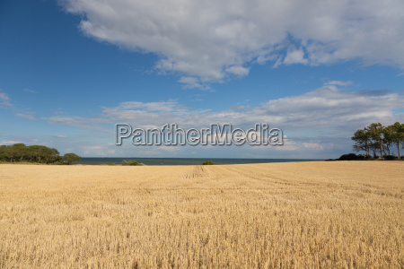 sea and field