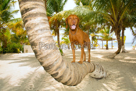 dog standing on palm tree