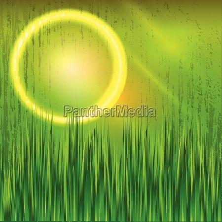 sphere grass light nature sun