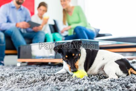 family dog u200bu200bplaying in the living