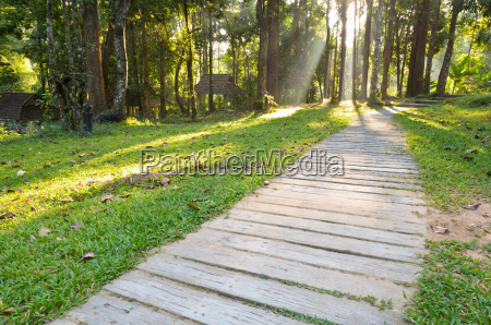pathways in tropical forests morning