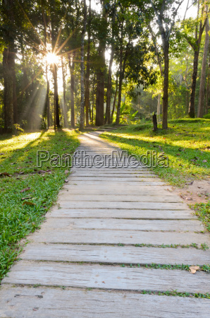 pathways, in, tropical, forests, morning - 12509378