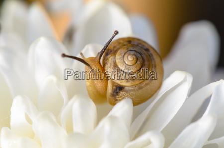snail on white flower