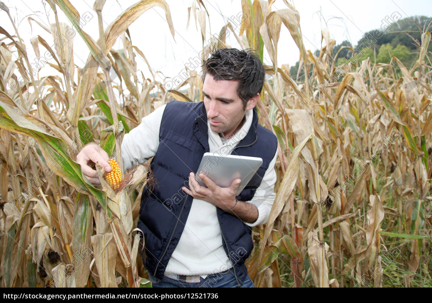 agronomist, analysing, cereals, with, electronic, tablet - 12521736