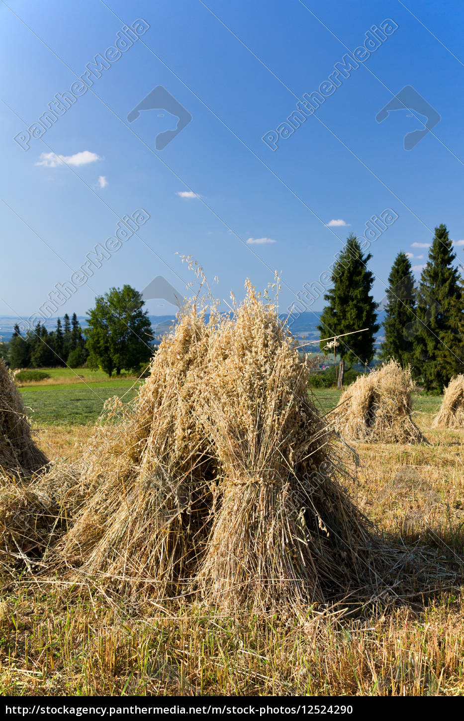 field, with, some, bundles, of, hay - 12524290