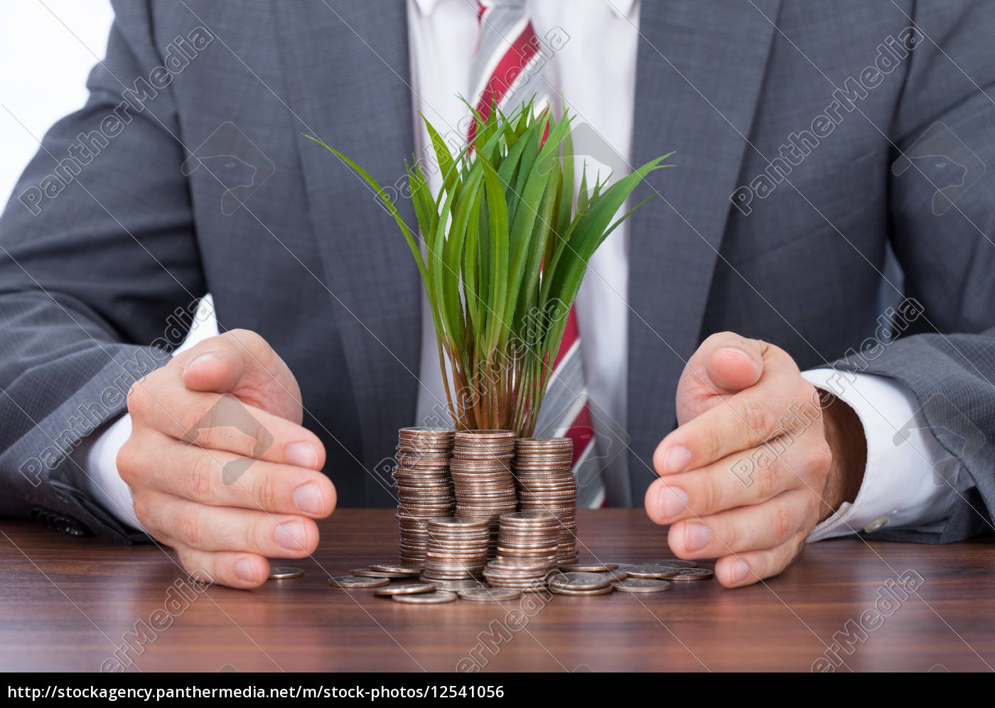 businessman, protecting, saplings, on, coin, stacks - 12541056