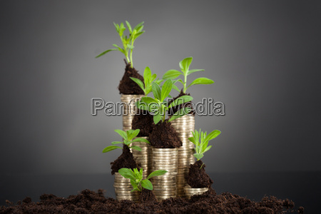 saplings on stack of coins at