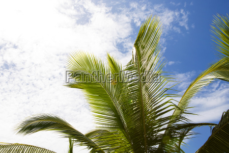 beautiful palm trees with cloudy blue