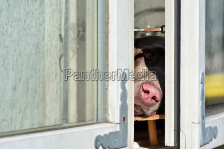 pet mammal window porthole dormer window