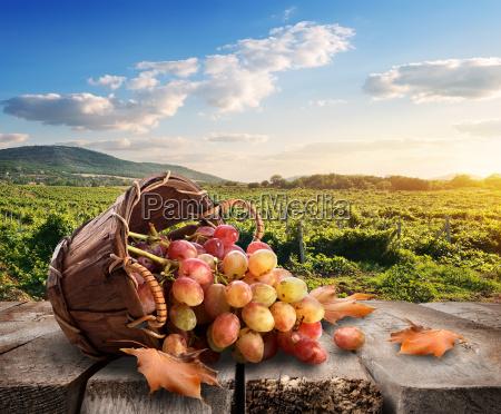 grapes and vineyard