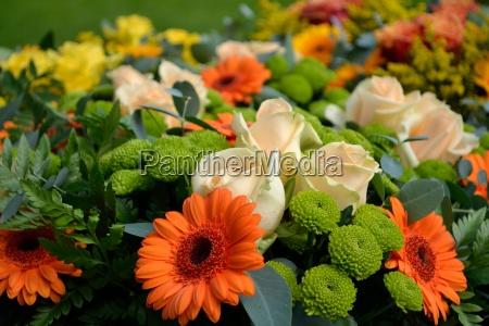 brilliant cut flowers