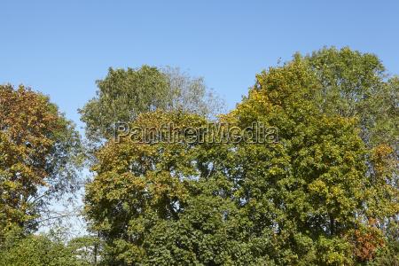 broadleaf forest tree crowns at