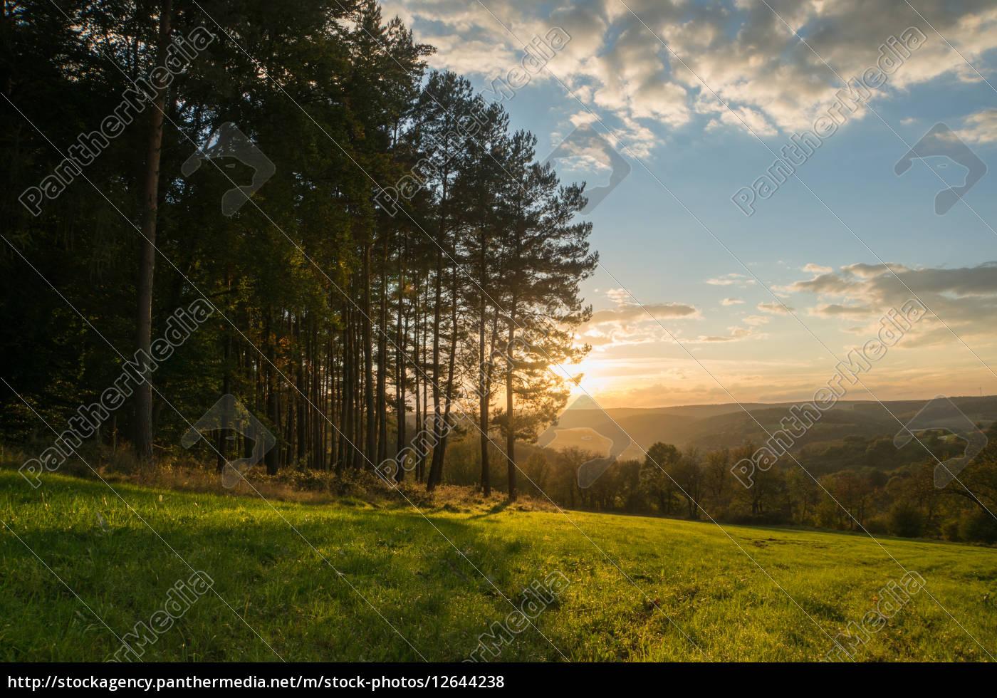 Royalty free image 12644238 - shine shines bright lucent light serene  luminous tree