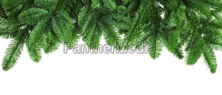 density fir branches on white