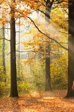 sun rays lit glade in autumn