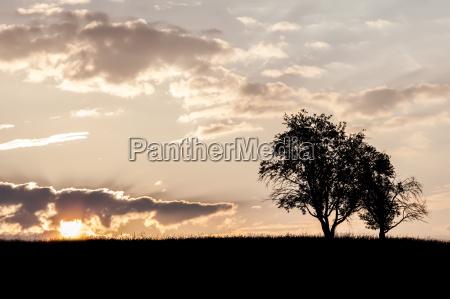 trees in sunrise