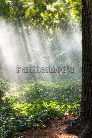heavy rain in forest in sunny