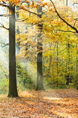 sun rays lit lawn in autumn