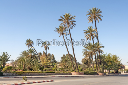 palm trees in the city of