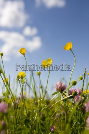 close up of tranquil field of