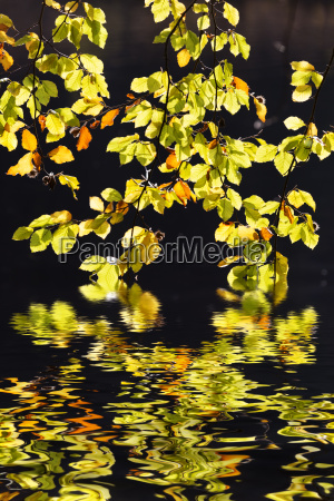colorful autumn foliage with reflection