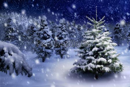 tannenbaum in snowy night