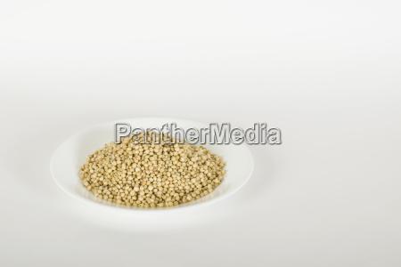 jowar sorghum in a white plate