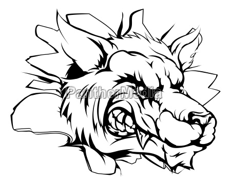 wolf mascot breaking through wall