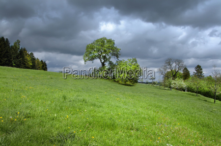 sunny meadow with dark storm clouds