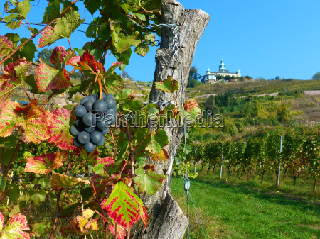 at the vineyard