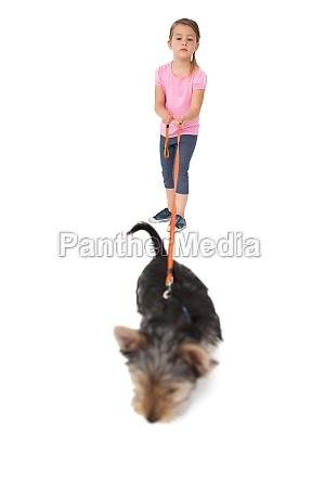 little girl walking yorkshire terrier pup