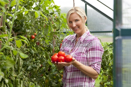 smiling woman picking ripe tomatoes in