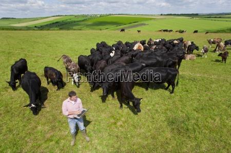 farmer using laptop among herd of