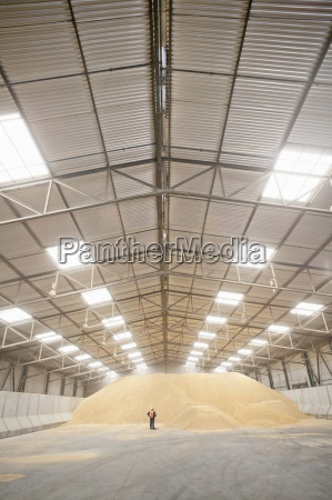 worker standing at wheat grain heap