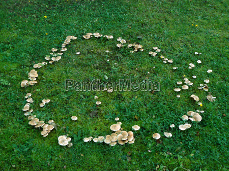 hexenring fairy ring from fungi