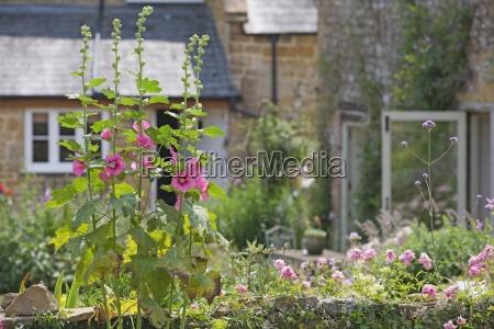 flowers growing in beautiful cottage garden